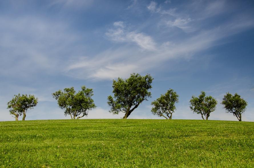 5trees.jpg