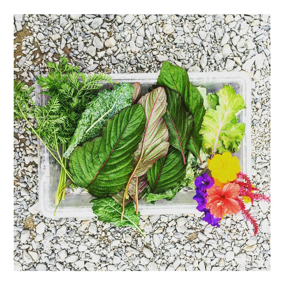 Greens-Rincon-Puerto-Rico-Garden-smoothies-juices-healthy-fresh-coffee-Vegan-Vegetarian-Paleo-Gluten_free-Dairy_free-organic-carta_buena-About_Us.png