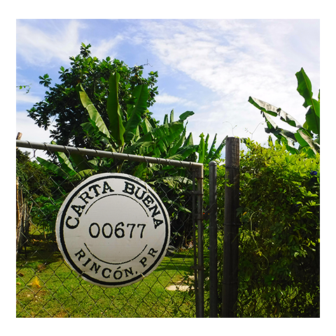 Enter-Garden-Bananas-Rincon-Puerto-Rico-smoothies-juices-healthy-fresh-coffee-Vegan-Vegetarian-Paleo-Gluten_free-Dairy_free-raw-organic-carta_buena-About_us.png