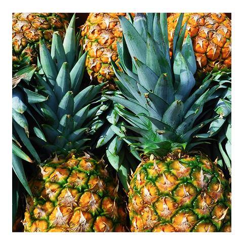 Pineapple-Cart-Garden-Bananas-Rincon-Puerto-Rico-smoothies-juices-healthy-fresh-coffee-Vegan-Vegetarian-Paleo-Gluten_free-Dairy_free-raw-organic-carta_buena-About_us.png