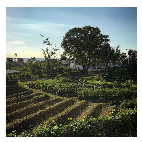 garden view.png