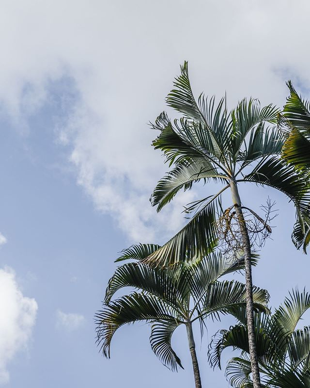 Just one of the many reasons we love living on an Island… 🌴🌴🌴 . . . . . . . . #purchasewithpurpose #empoweringwomen #rescuinggirls #globalgoods #madeformore #alwaysmore #dareformore #giftswithpurpose #ethicallymade #ethicalfashion #changemaker #sustainablefashion #fashionwithpurpose #fashionwithapurpose #artisans #artisangoods #storybrand #forthesakeofgirls #giveback #summervacation #schoolsout #schoolisout #newhopegirls #justice #mission #internationaljustice