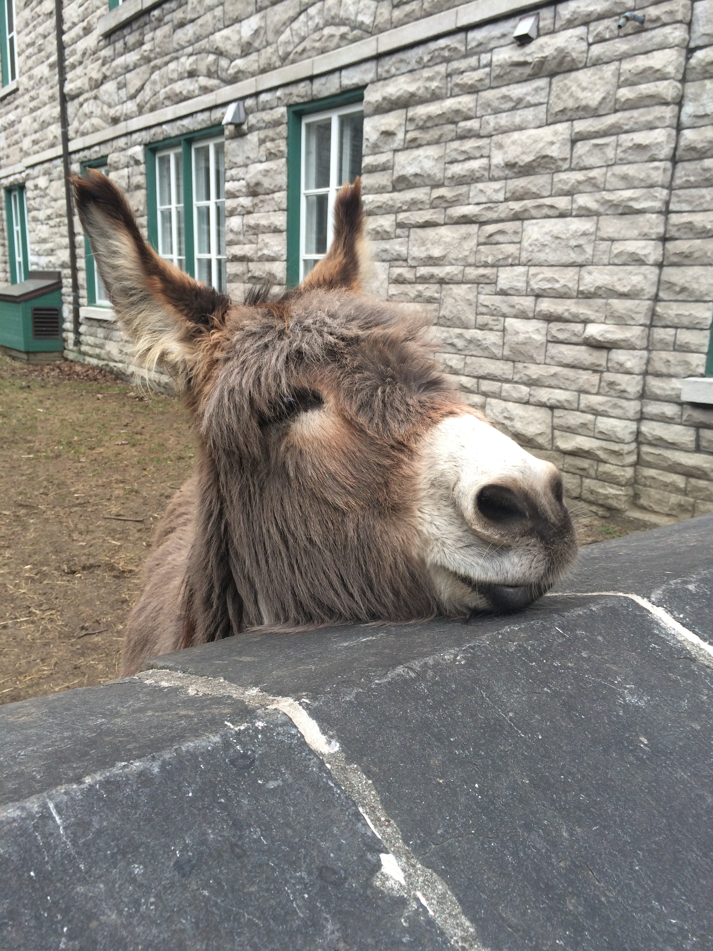 Aldo the donkey!