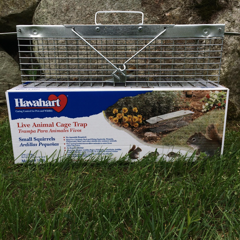 Havahart trap locked loaded and ready to go into my garden!