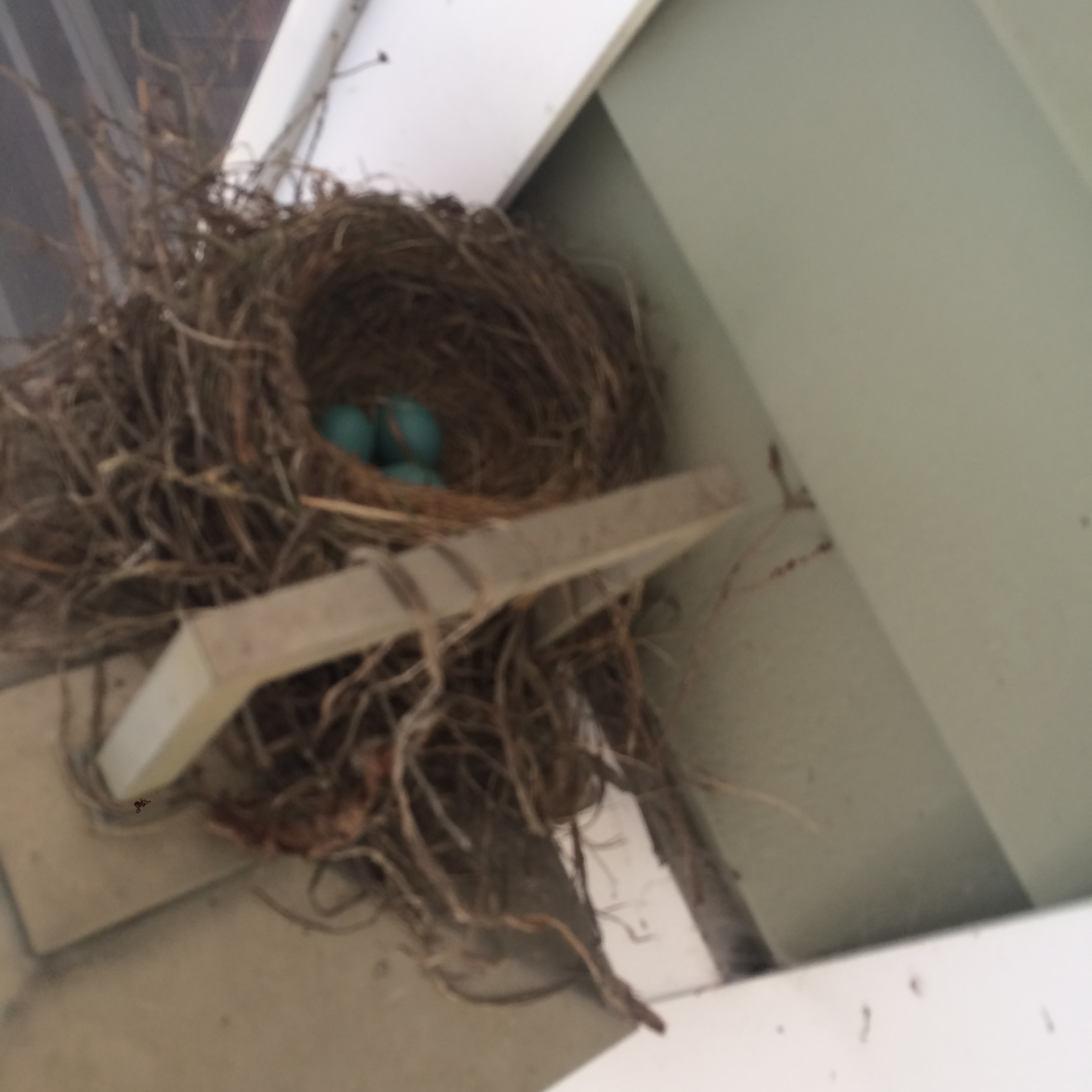 Three little eggs sitting in the nest.