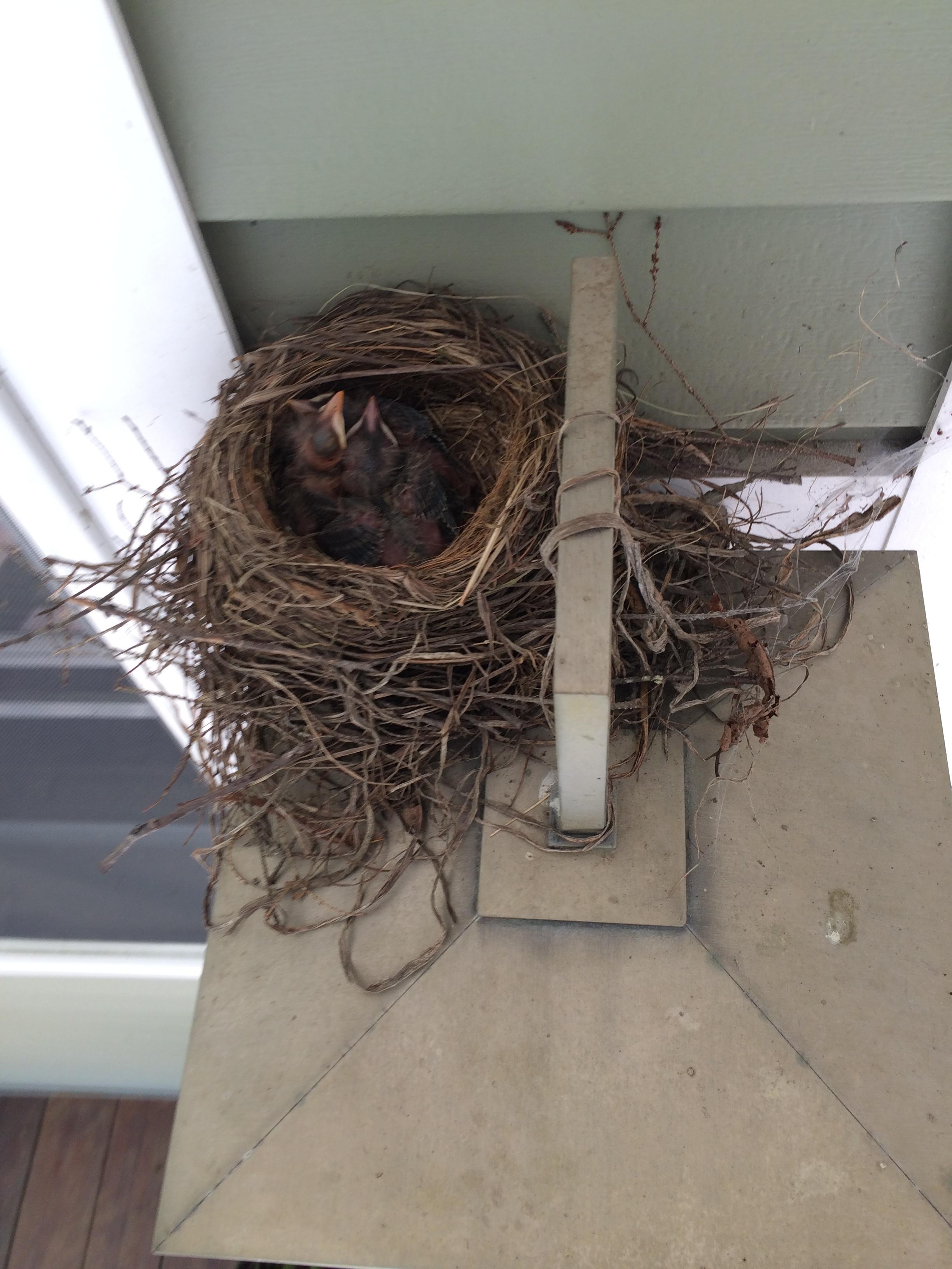 Three little cuddling nestlings.
