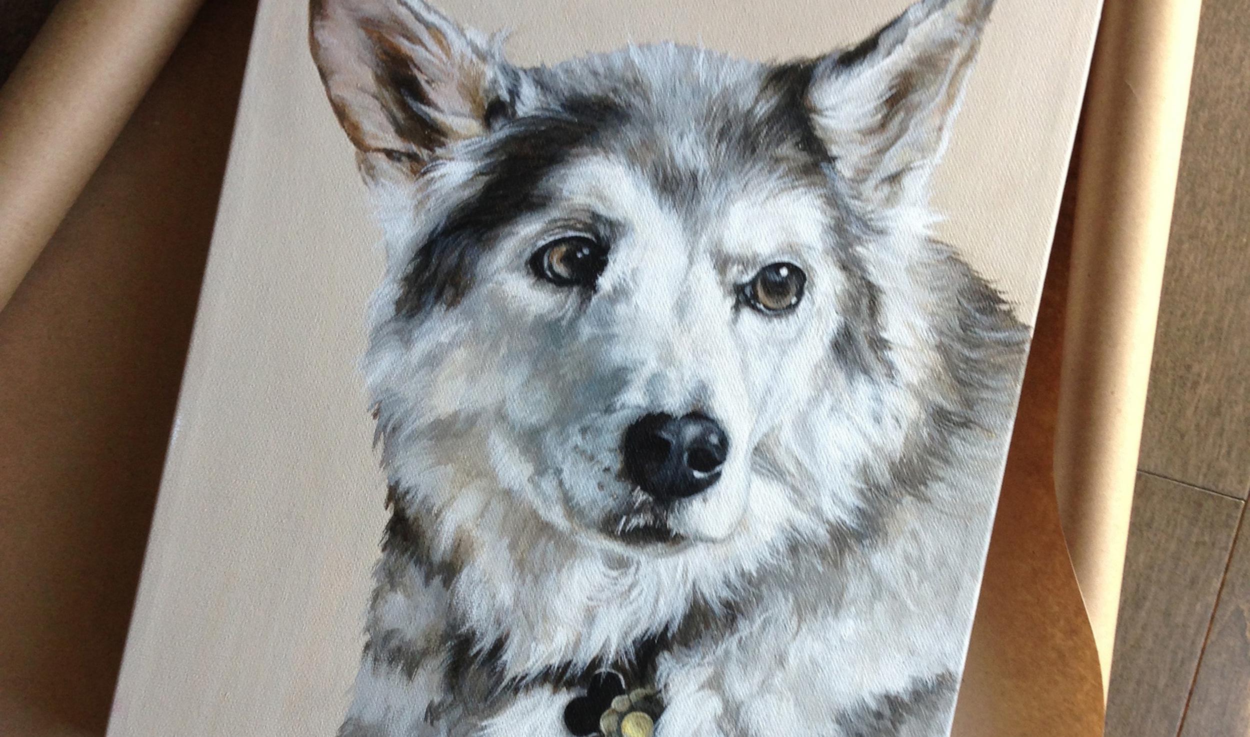 Husk/German Shepard mix portrait painting.