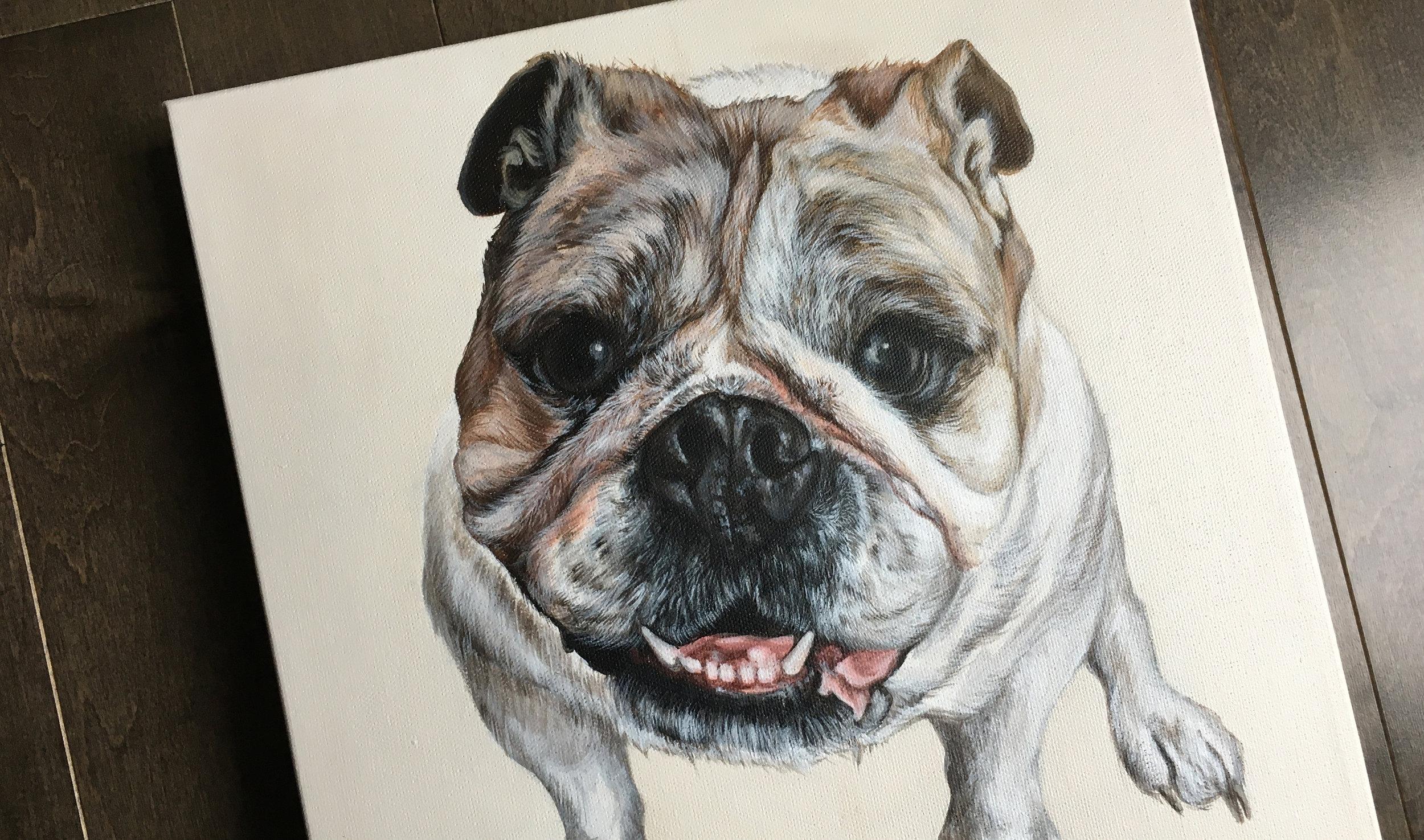 Lola (English Bulldog)