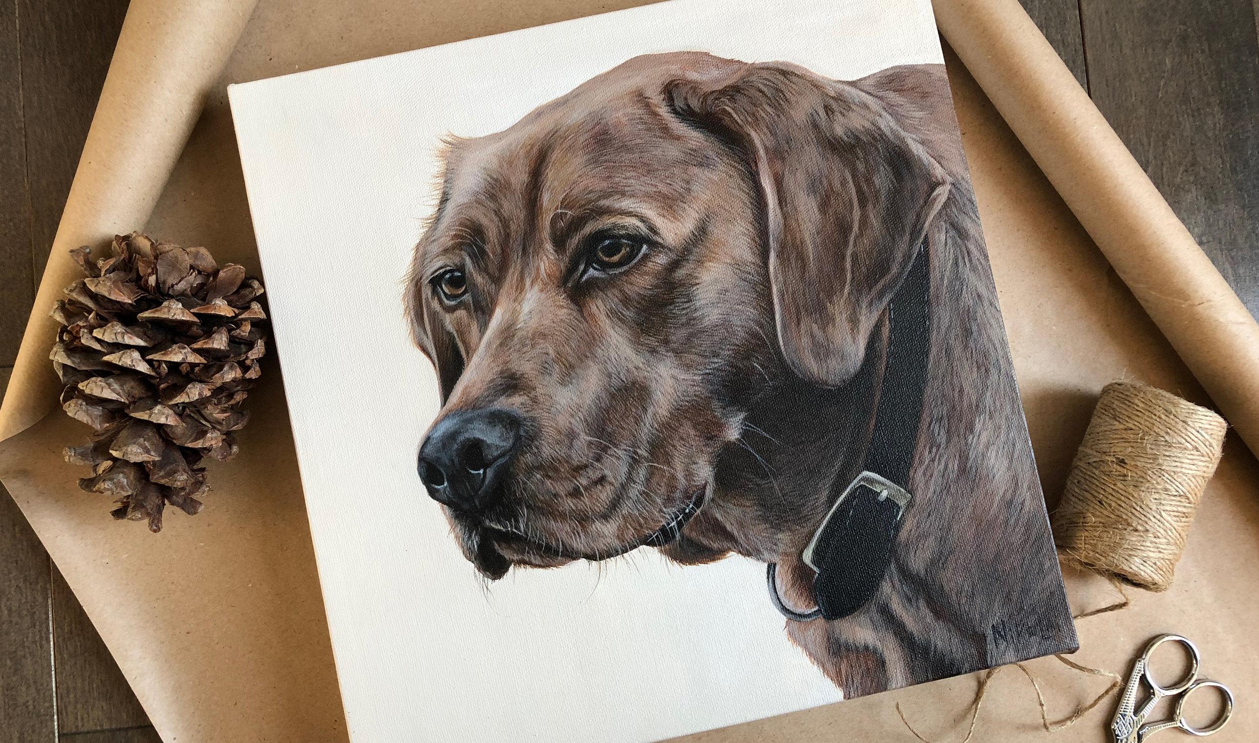 Cooper (Fox Red Labrador)