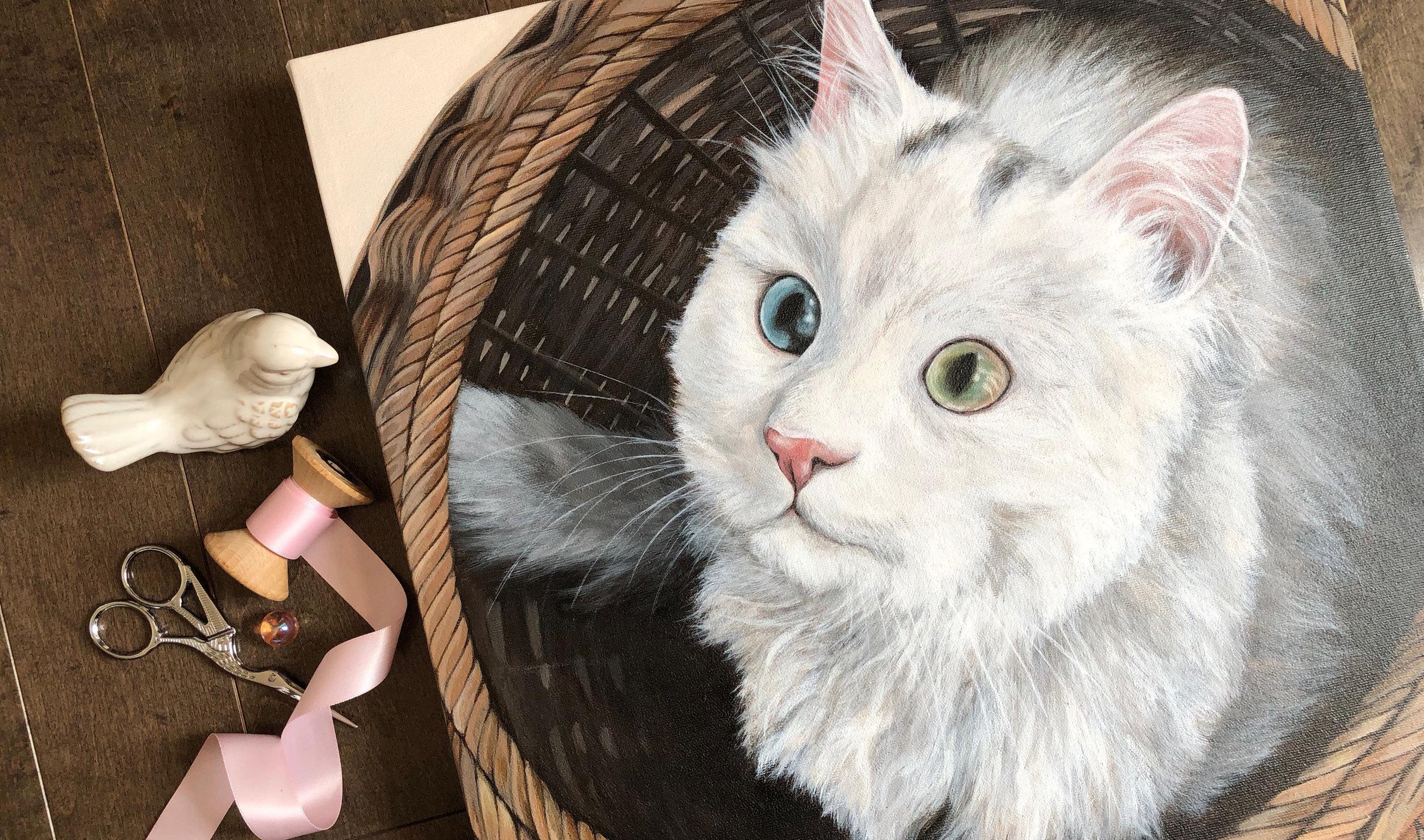 Chamchi (Cat)