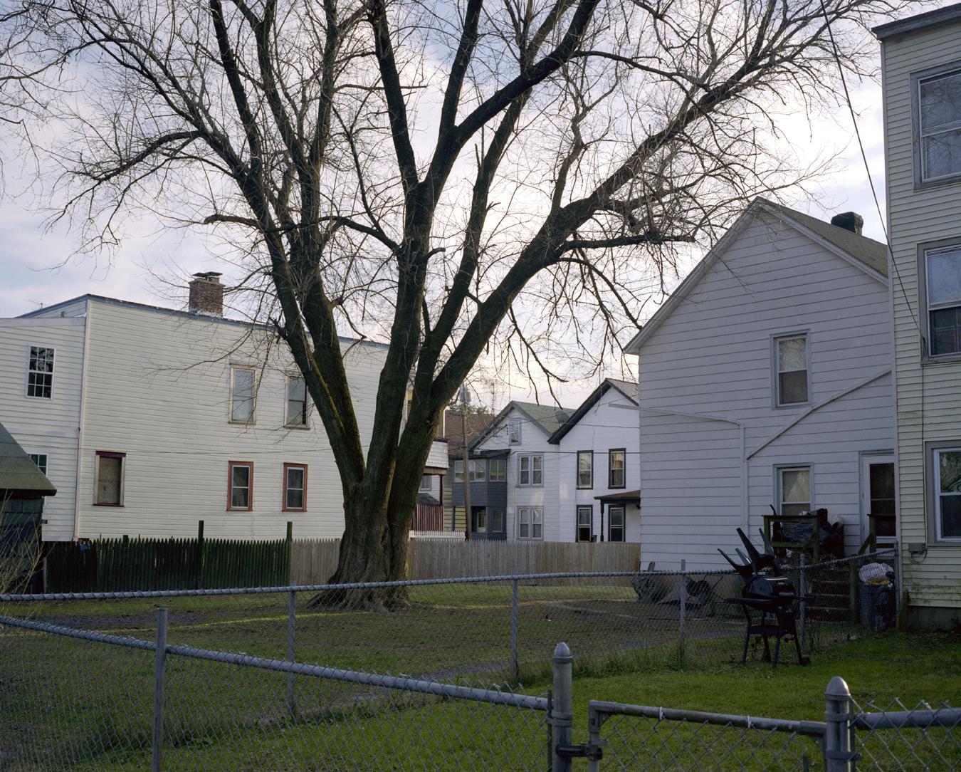 StrawberryAlley.Backyard.Tree.2Small.jpg