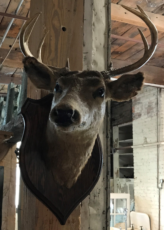 Wall Mounted Deer Head