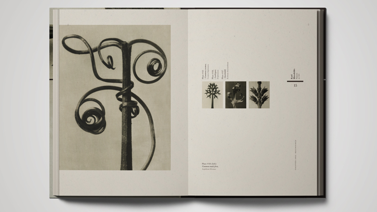 Karl Blossfeldt: Nature as Art  / Graduate Project