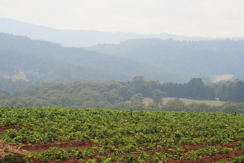 yarra ranges farming