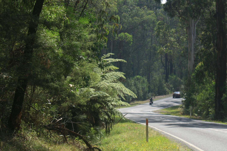 kinglake healesville road bikepacking