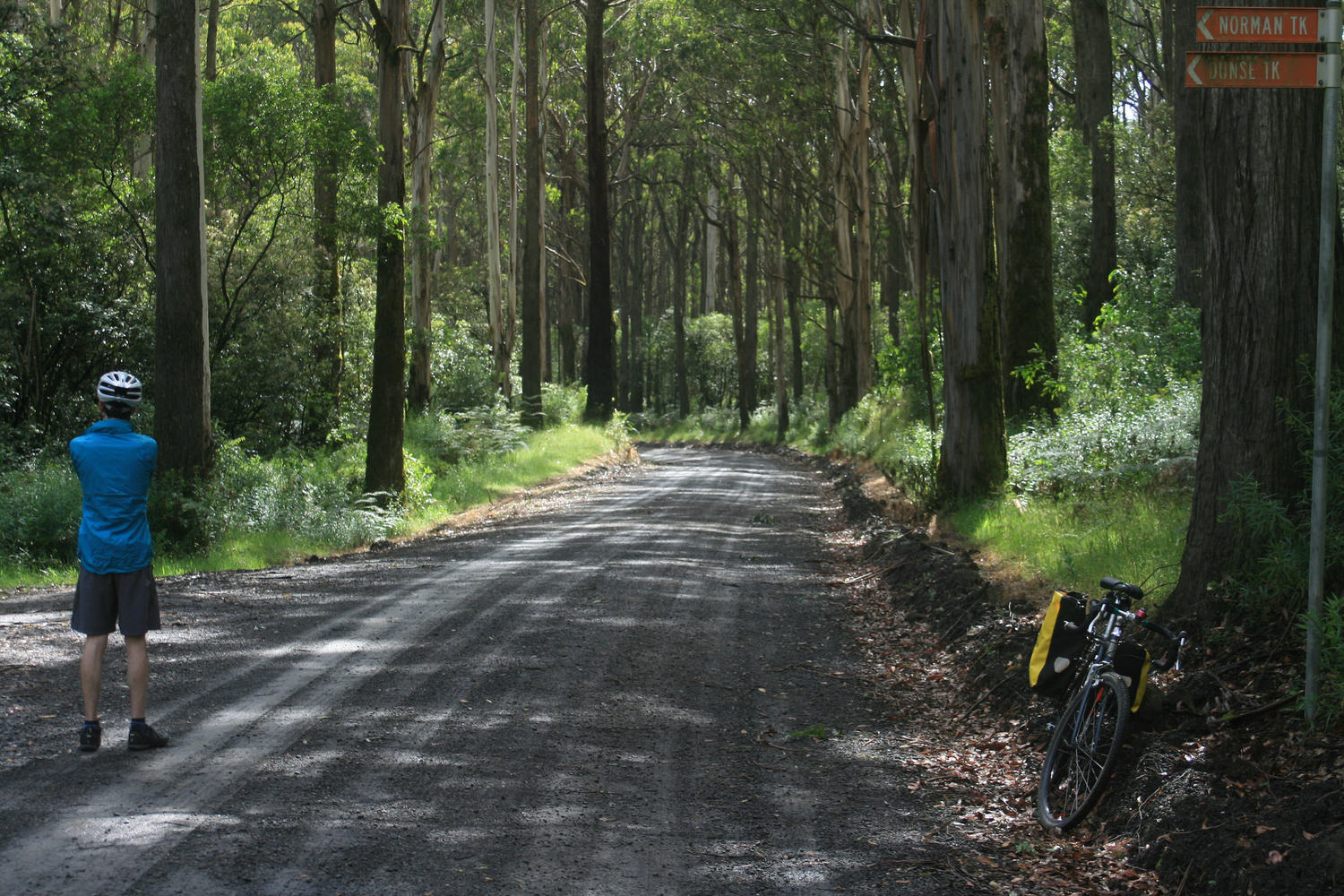 otways sabine road cycling