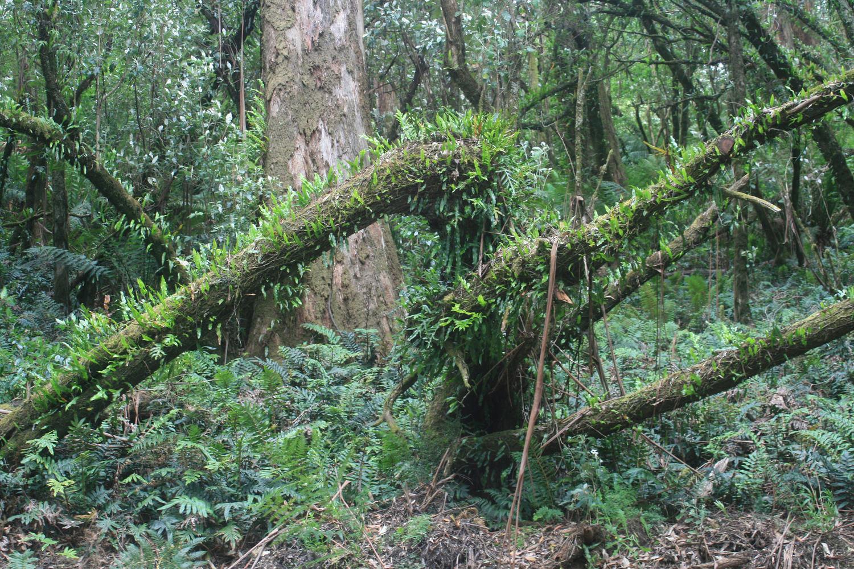 otway ranges forest