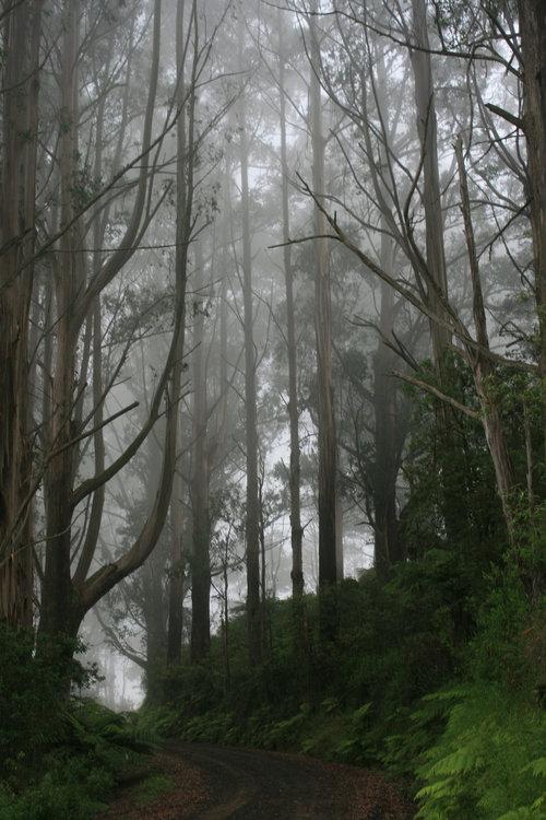 grand ridge road mist