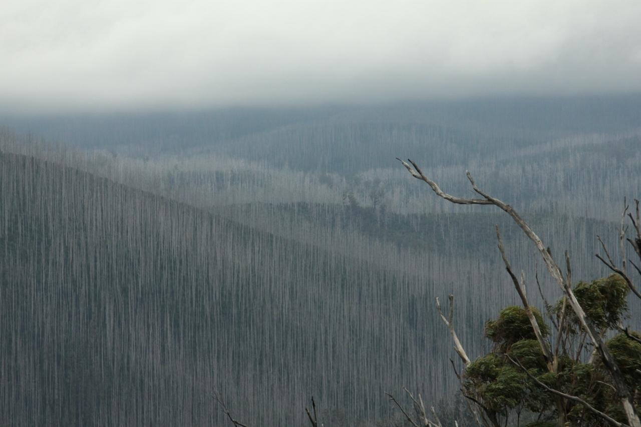 marysville yarra ranges black saturday