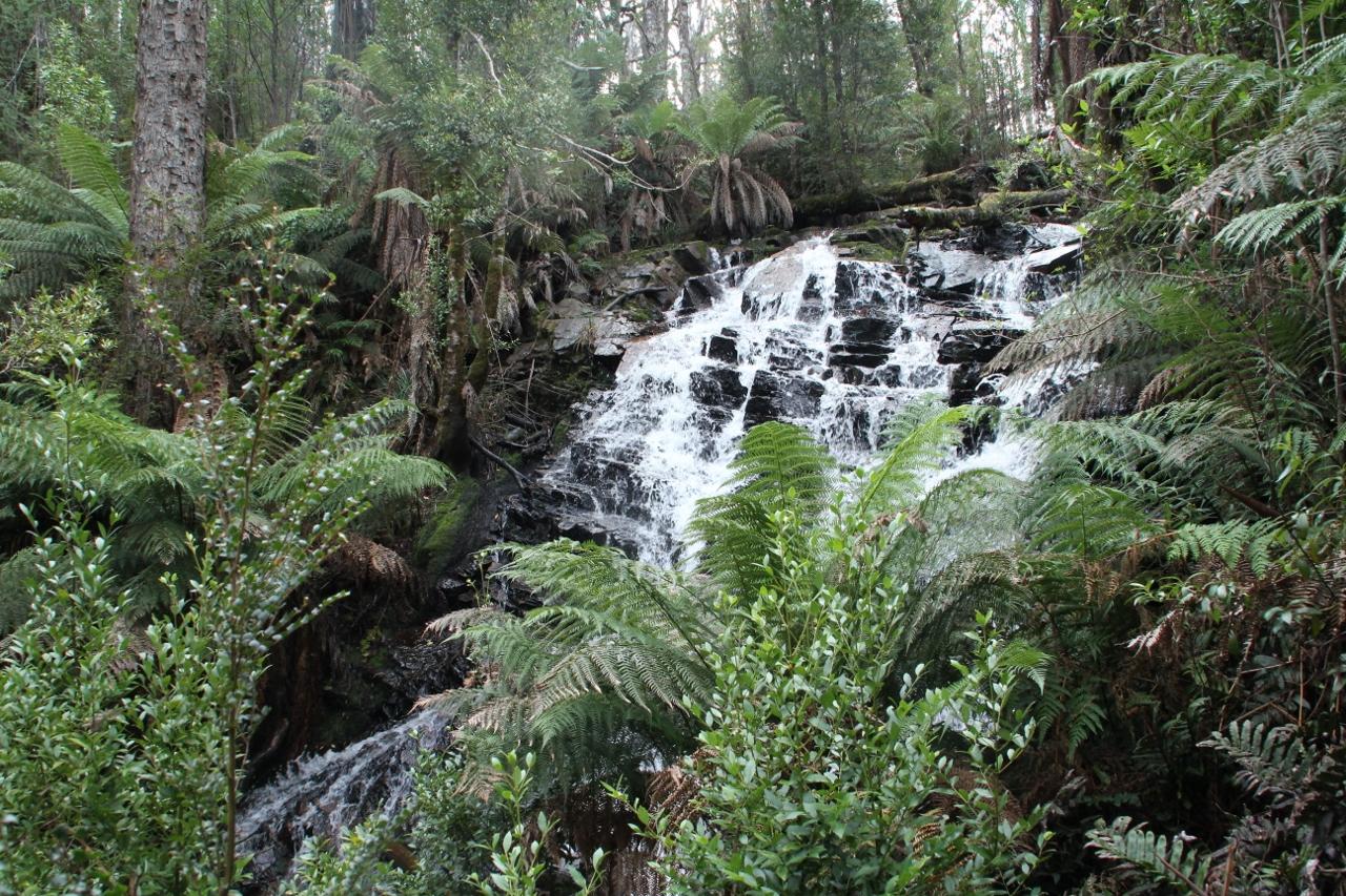 cora lynn falls