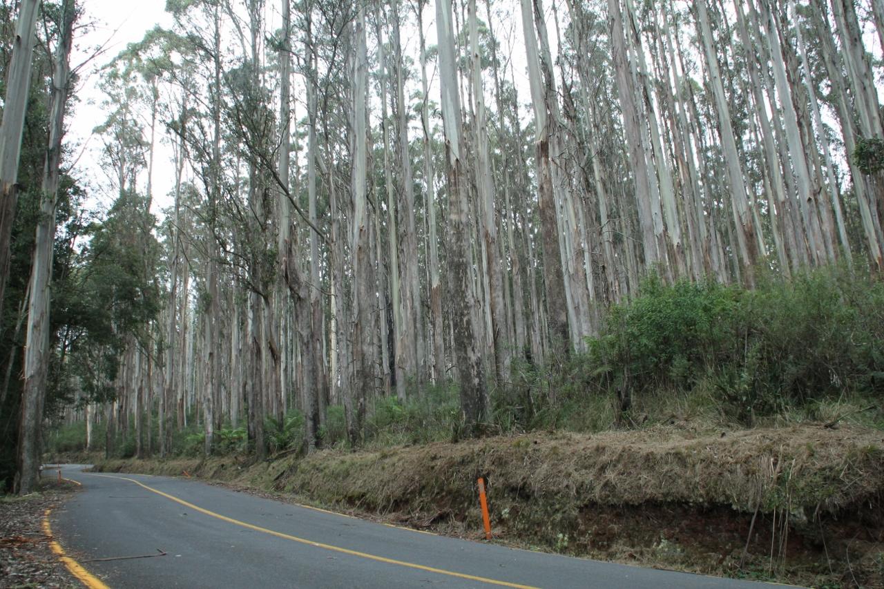 marysville woods point road