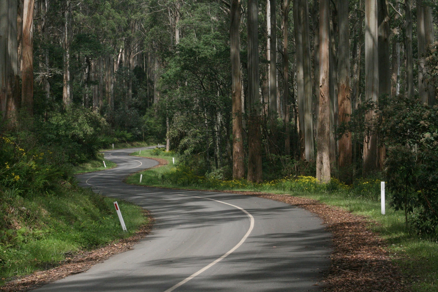 mount donna buang road cycle touring