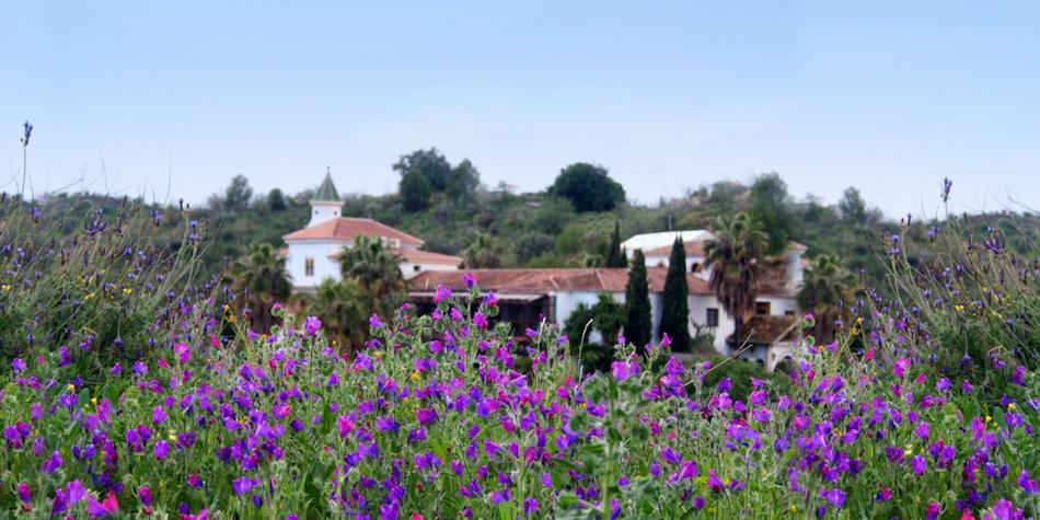 Nature around Santillan