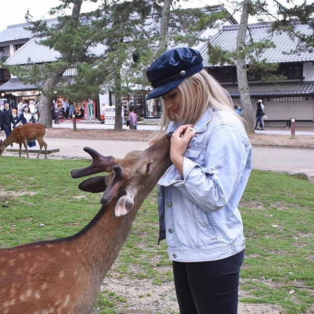 Japan is animal heaven 🙌🏼🦌💕
