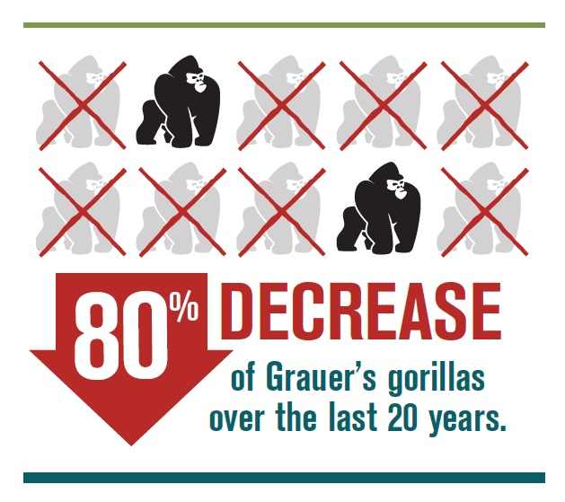 Infographic courtesy of the Dian Fossey Gorilla Fund International