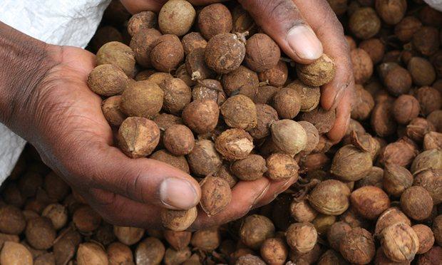 Photo via Eco Fuels Kenya