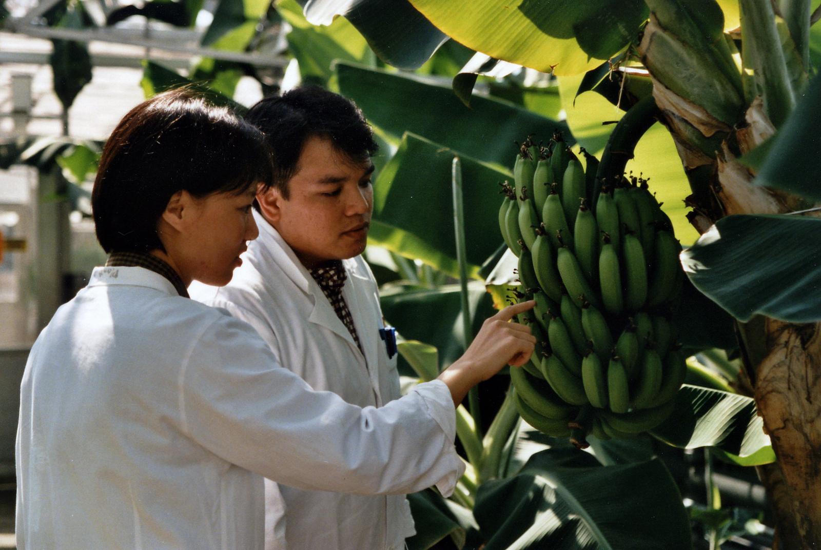 Researchers analyze a cask of bananas at IAEA Plant Breeding Unit in Seibersdorf, Austria. Image by  IAEA Imagebank via Flickr