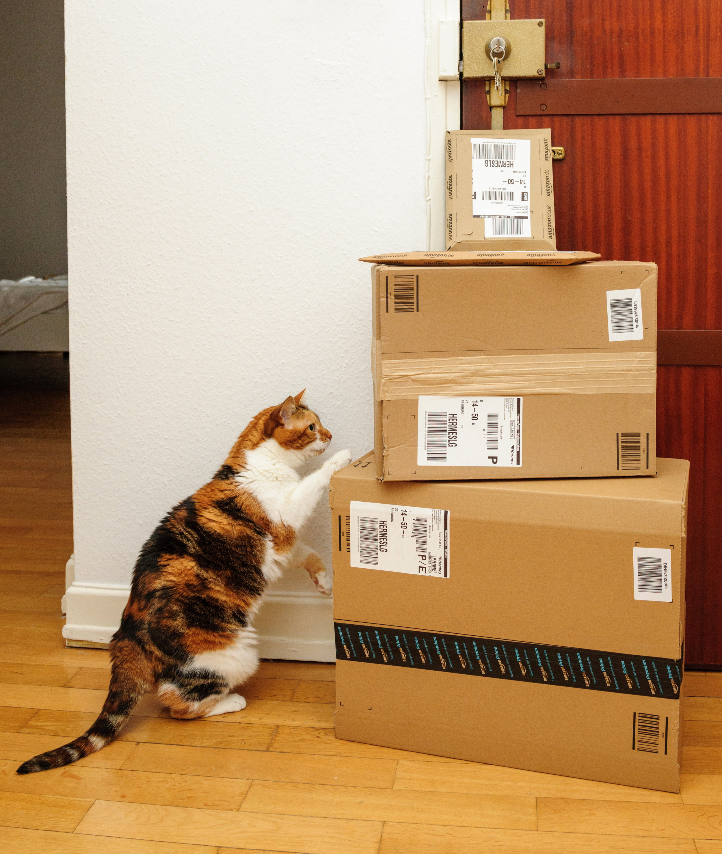 Curious-cat-inspecting-multiple-Amazon-Prime-boxes-636699124_3411x4034.jpeg