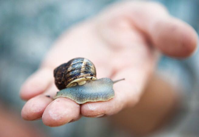 Image Courtesy of Peconic Escargot