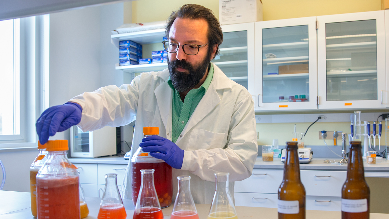 Samuel Alcaine pours beer brewed from whey. Image courtesy of Cornell University