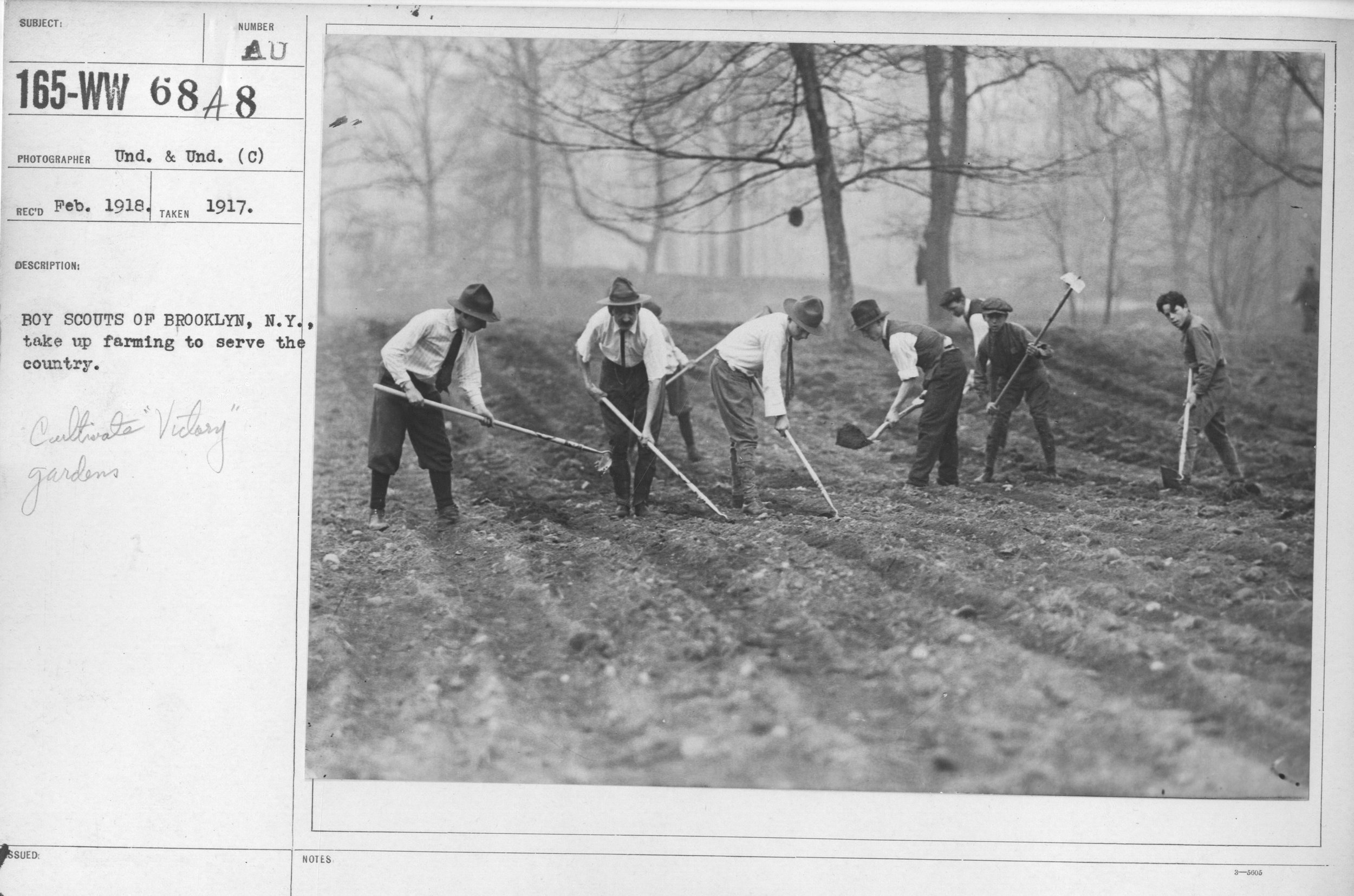 Boy scouts of Brooklyn, New York, dig a victory garden in 1917. Photo via National Archives