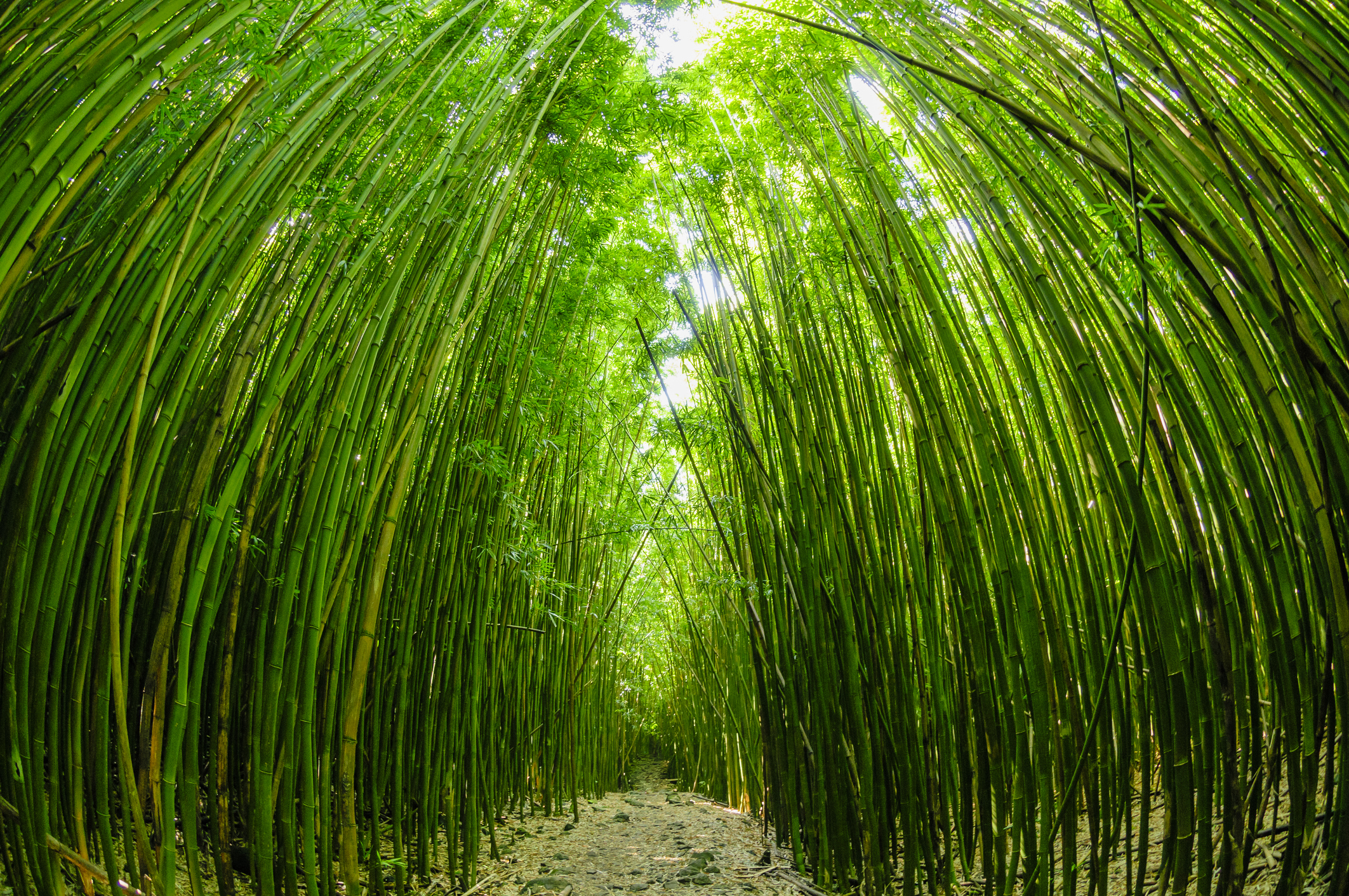 relaxing-bamboo-forest-near-upcountry-massage-maui.jpg
