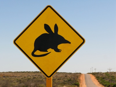 Bandicoots get killed on the roads at night. This is a road sign warning that bilbies are in the area. Photo©Getty Images