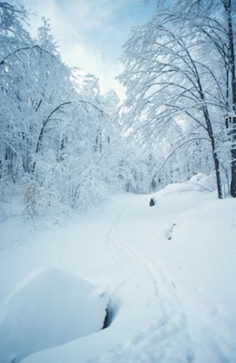Snowy winter in a deciduous forest ©Getty Images