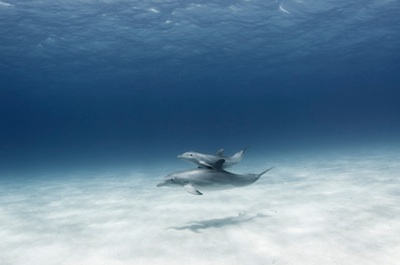 A dolphin and calf. ©Getty Images