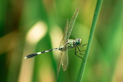 Dragonfly ©Getty Images
