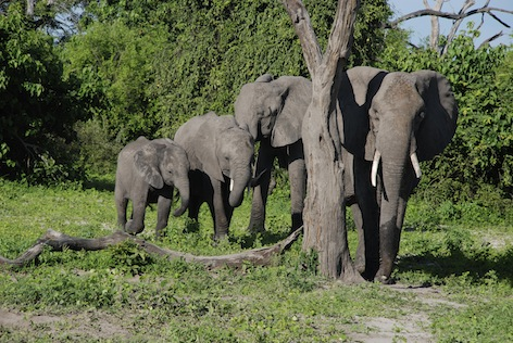 A group of African elephants ©Getty Images