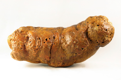 Fossilised animal poo is callled coprolite. ©Getty Images