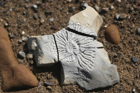 A fossil ammonite ©Getty Images
