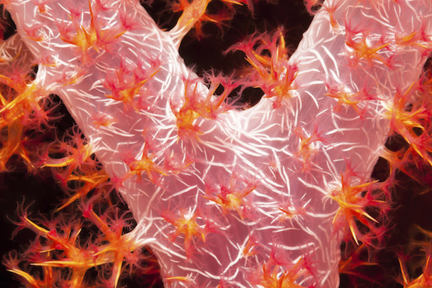 Coral polyps ©iStock