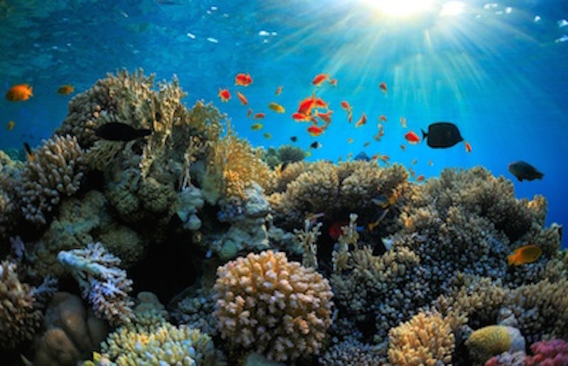 Coral reef ©Getty Images
