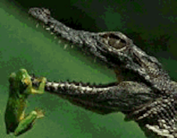 Very young crocodile and prey. ©Getty Images