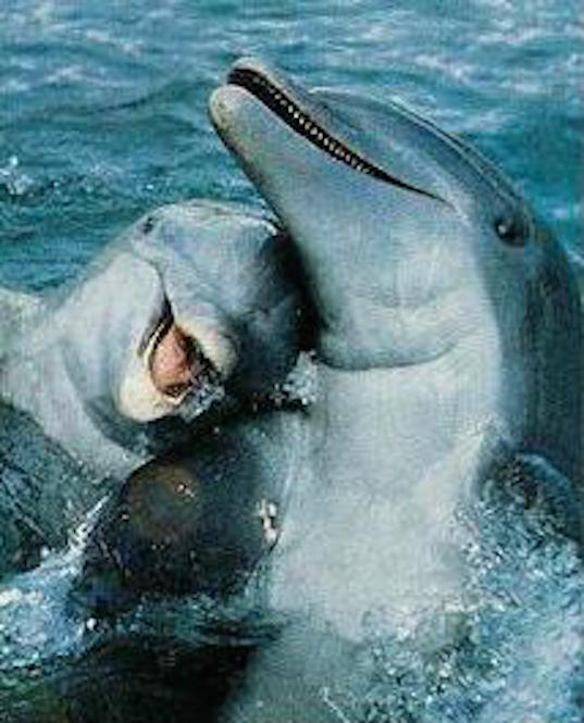 Dolphins have small pointed teeth ©Getty Images