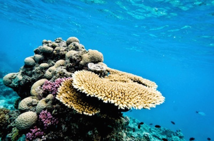 Some coral formations in the Great Barrier Reef ©Getty Images