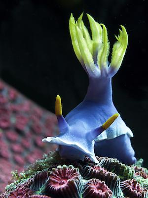 Sea slug. Photo©iStock