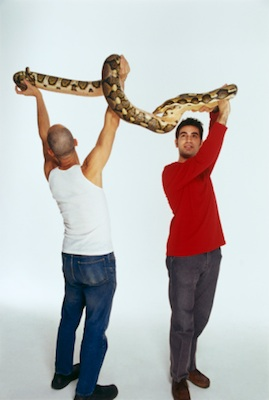Pythons can get very big and heavy. ©Getty Images